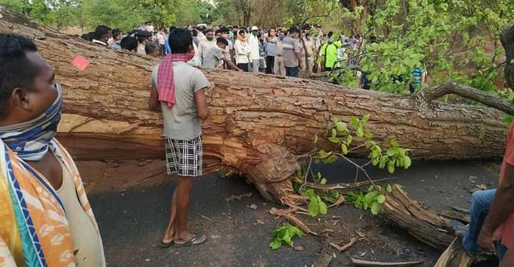Woman killed as dead tree breaks and falls on her