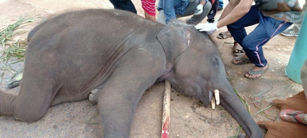 Jumbo death in Kapilas zoo sparks concern