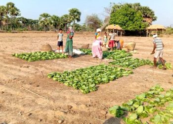 Tribals suffer as DFO restricts MFP sales