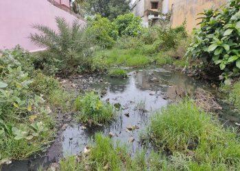 Ganjam Dengue fear grips Buguda NAC residents