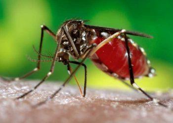 Dengue cases rise to 18 in Ganjam district