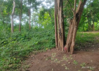 Farmers here rely on rituals for rain forecast