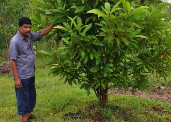 Bhadrak teacher wins hearts for planting over 8,000 trees