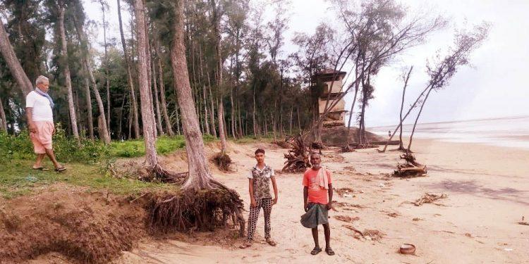 Casuarina forests fast shrink along Balasore coast