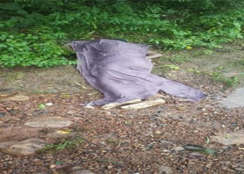 Unidentified woman's body recovered from Brahmani River in Jajpur district